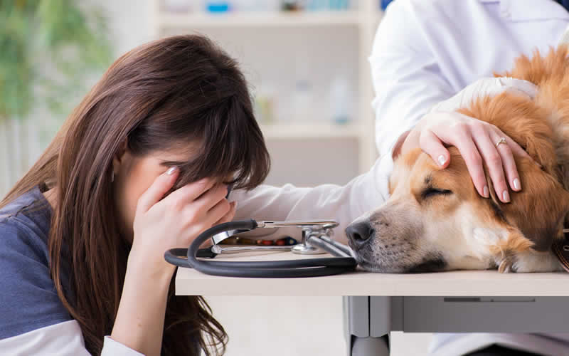 owner crying as pet needing euthanasia