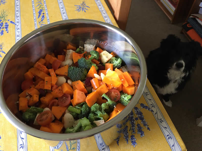 Vegan homemade dog food feed the rainbow recipe made in pressure cooker