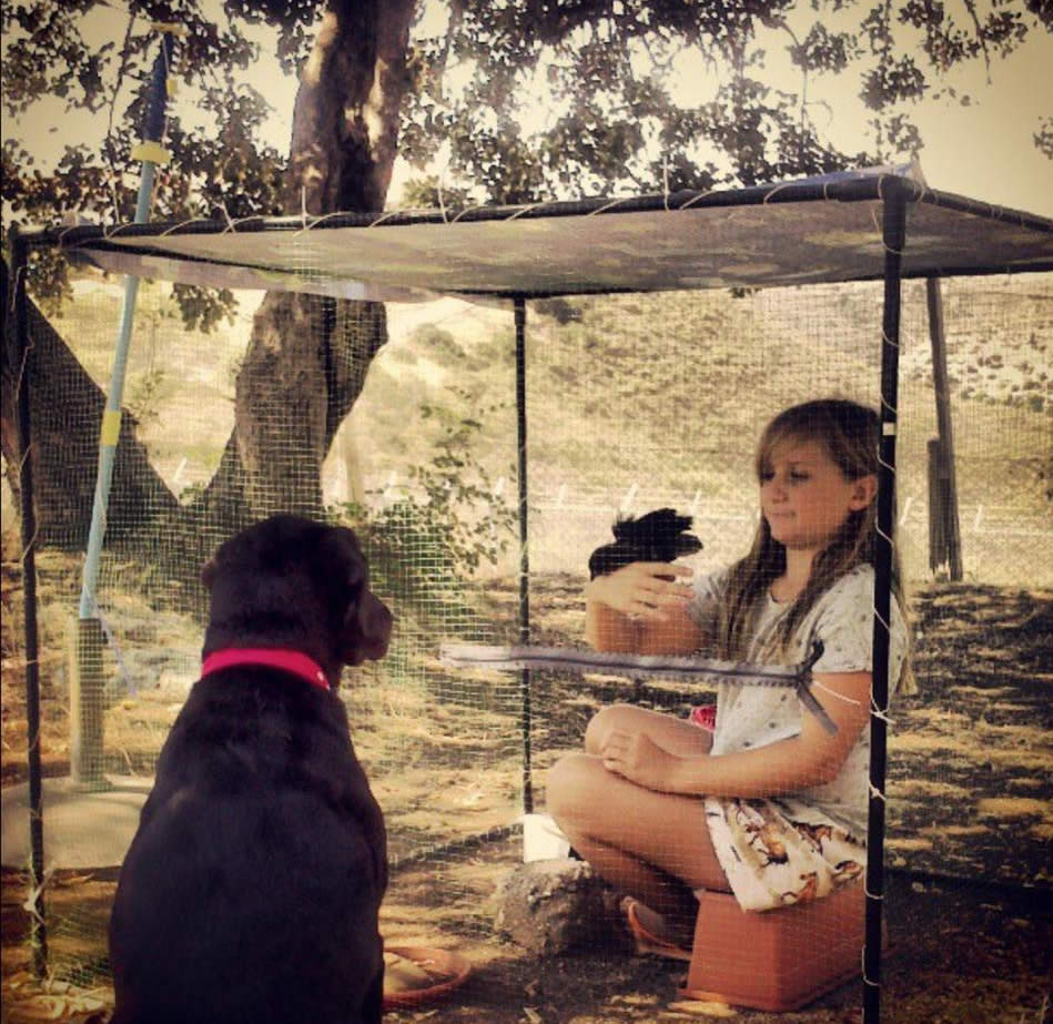 coco the chicken with Emily in an enclosure in Cyprus