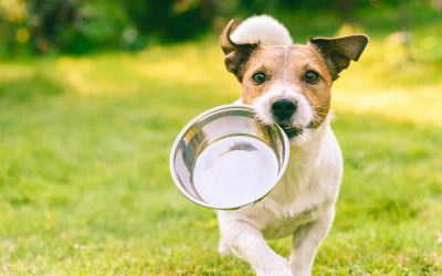 Will my dog like a plant-based diet?