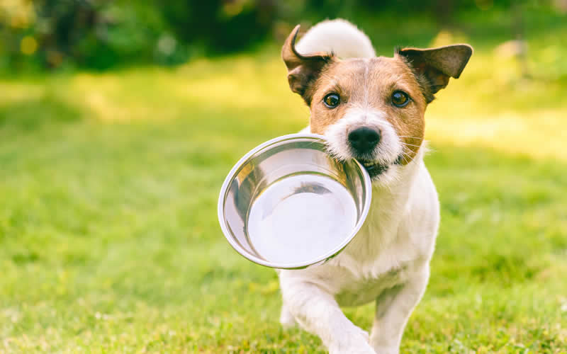 happy jack russell carrying an empty dog bowl