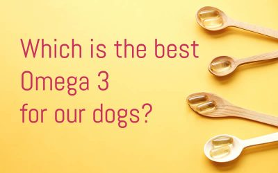 The most effective Omega 3's for your dog