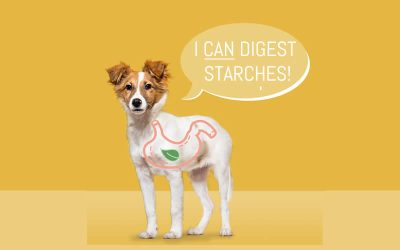 Dogs CAN digest starches