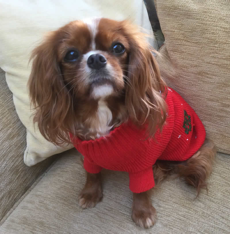 Miss Zsa Zsa plant-based dog featured on ITV news