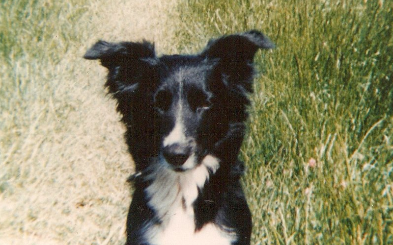 Bramble the very first vegan dog owned by Anne Heritage who lived till she was 25