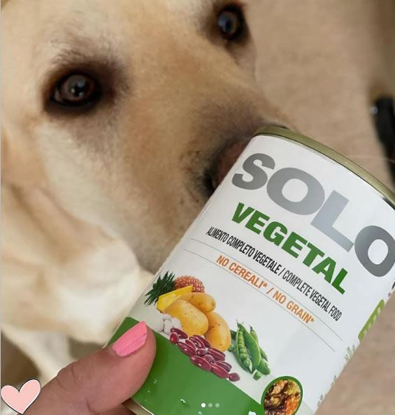 labrador sniffing solo-vegetal tin