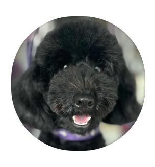 Vegan dog Cooper