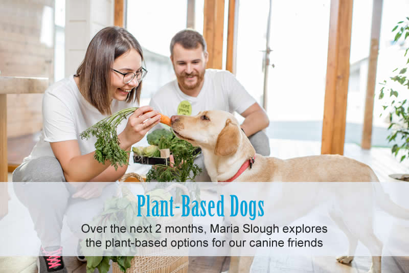 labrador and carrots and vegan owners