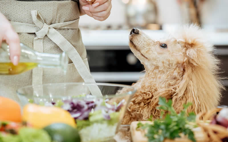 poodle in kitchen